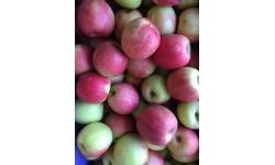 1kg Pommes Crips Pink Bio Saint Andiol (13)