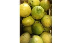 1kg citrons Bio Italie