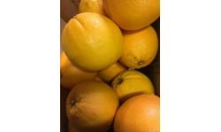 1kg Oranges Navel BIO Italie